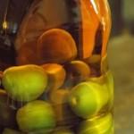 蜂蜜梅酒、田舎梅酒の作り方を教えます!美味しいです