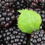 ブラックベリーソースの作り方、レシピを紹介