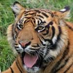 最強の生物、最強の動物はこれだ!この世は弱肉強食だ!虎、ワニ、熊!