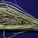 ウナギ、納豆、豚肉、レバー、夏バテ対策に効く食べ物はこれ!完全解説と体験談