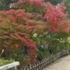 神庭の滝 、三景園他中国地方観光地 おすすめ情報(岡山、広島)
