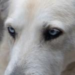 犬にあげてはいけない食べ物、ブドウ、みかん、果物はダメ?