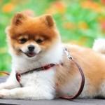 犬の食べ物、何が良い?何が悪い?注意点を解説