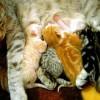 猫の飼い方(初心者必見)室内での飼い方、トイレ、エサ、ケージについて