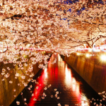 夜桜がライトアップされる大阪のスポットはここだ!
